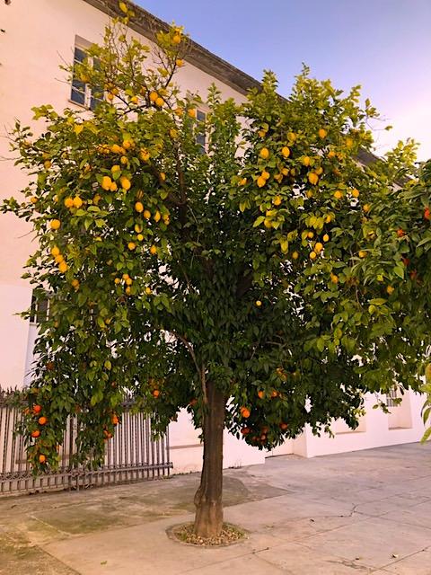 Naranjo-Limonero en Qué ver en Sevilla. Visita de Fin de Semana