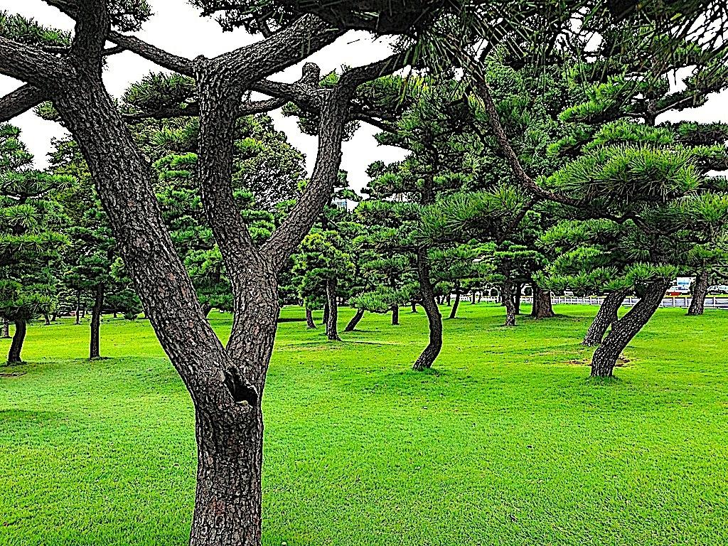 Parque en Tokio en Japón un viaje inolvidable